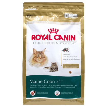 Royal Canin Maine Coon 31 Dry Cat Food (Click for Larger Image)