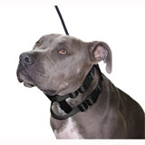 Cesar Millan Illusion Dog Collar & Leash System (Click for Larger Image)