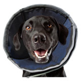 contech procone soft recovery collar for pets on lovemypets.com