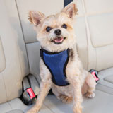 Solvit Deluxe Vehicle Safety Harness
