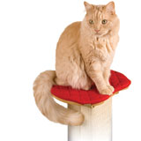 SmartCat Ultimate Cat Scratching Post Pad