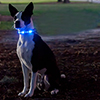 Dog-e Glow LED Collar