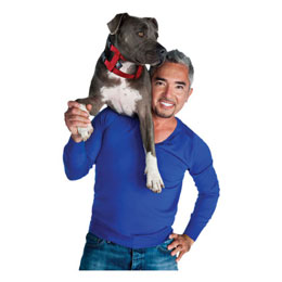 Find the Cesar Millan Illusion Dog Collar & Leash System at 1-800-PetMeds