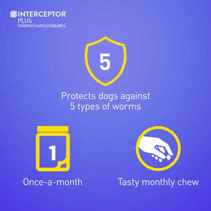 Interceptor Plus protects against 5 worms in 1 monthly chew