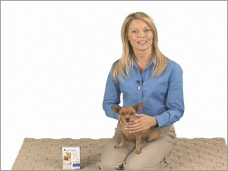 Prevent heartworms from infecting your dog or cat with Interceptor heartworm medicine