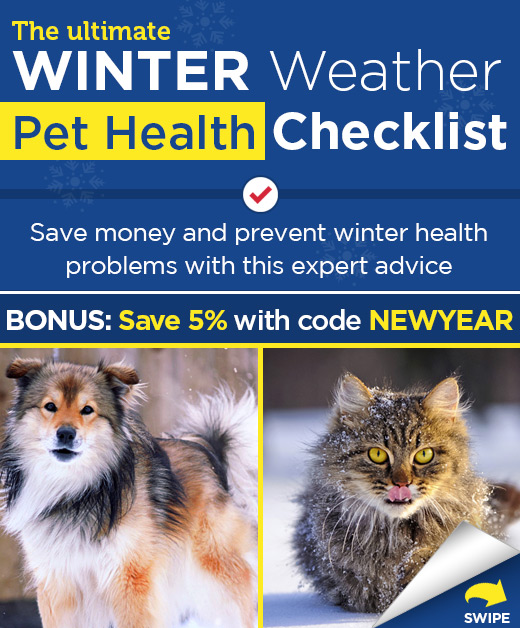 The ultimate winter weather pet health checklist